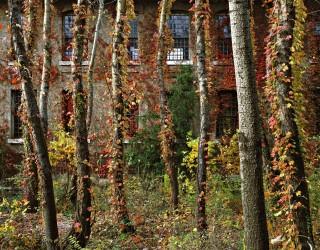 E23 Fall Study Courtyard