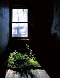 E59 Hallway study with plant life