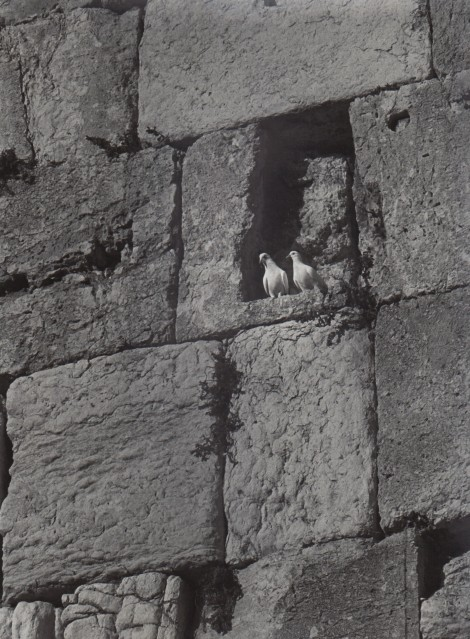 Doves in the Western Wall, 1972 - David RUBINGER