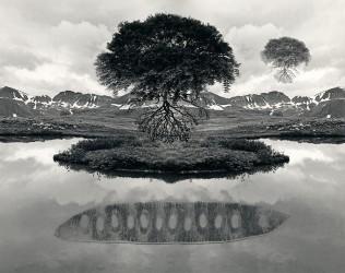 Floating Tree Colorado, 1969