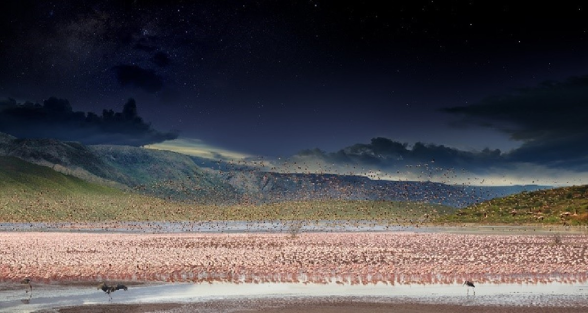 Lake Bogoria, Kenya - Stephen WILKES