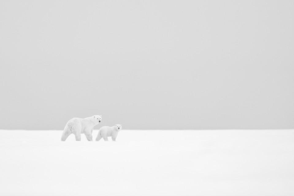 Dans l'immensité blanche - Kyriakos KAZIRAS