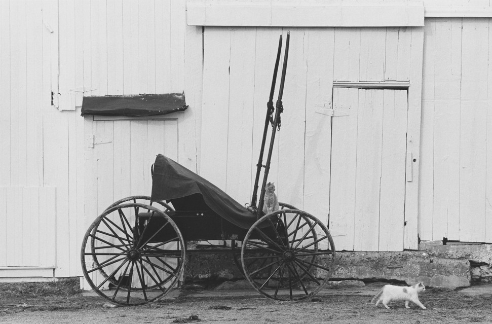 Buggy and Cats, 1967 - George TICE