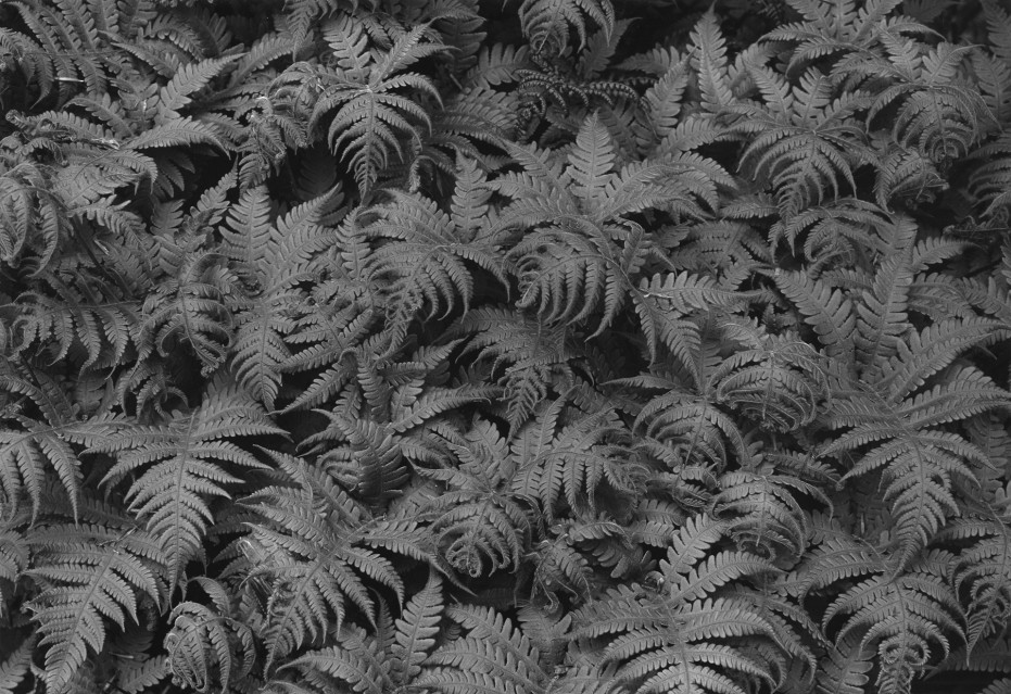 Ferns, 1959 - George TICE
