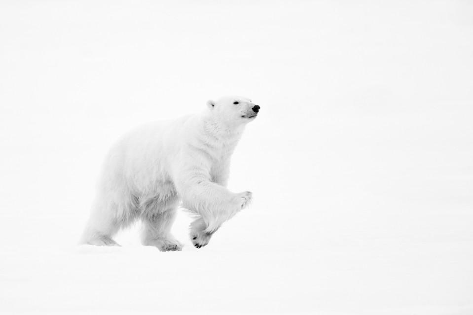 Running Bear - Kyriakos KAZIRAS
