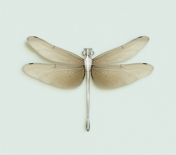 Dragonfly - Vincent FOURNIER