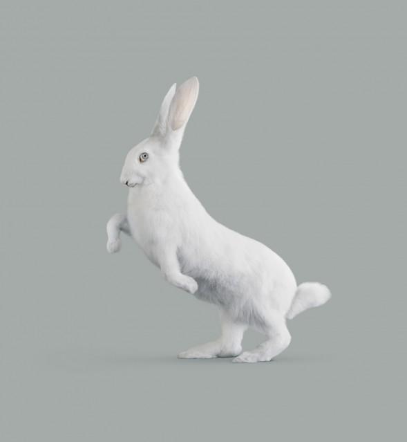 Rabbit - Vincent FOURNIER