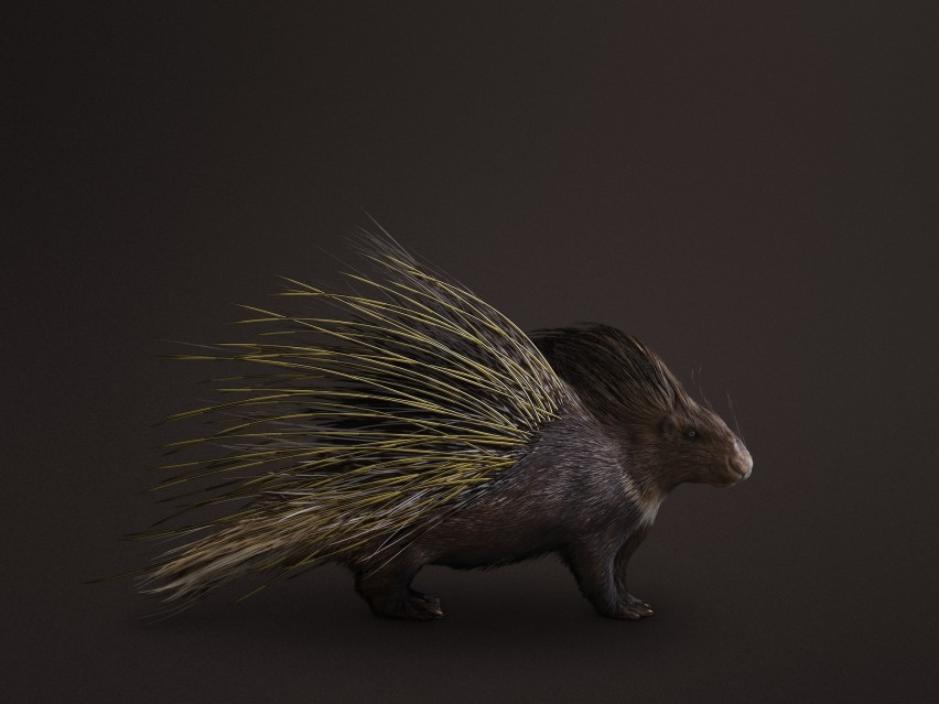 Golden Porcupine - Vincent FOURNIER
