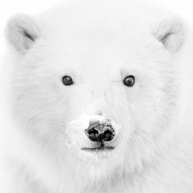 Teddy Bear - Kyriakos KAZIRAS