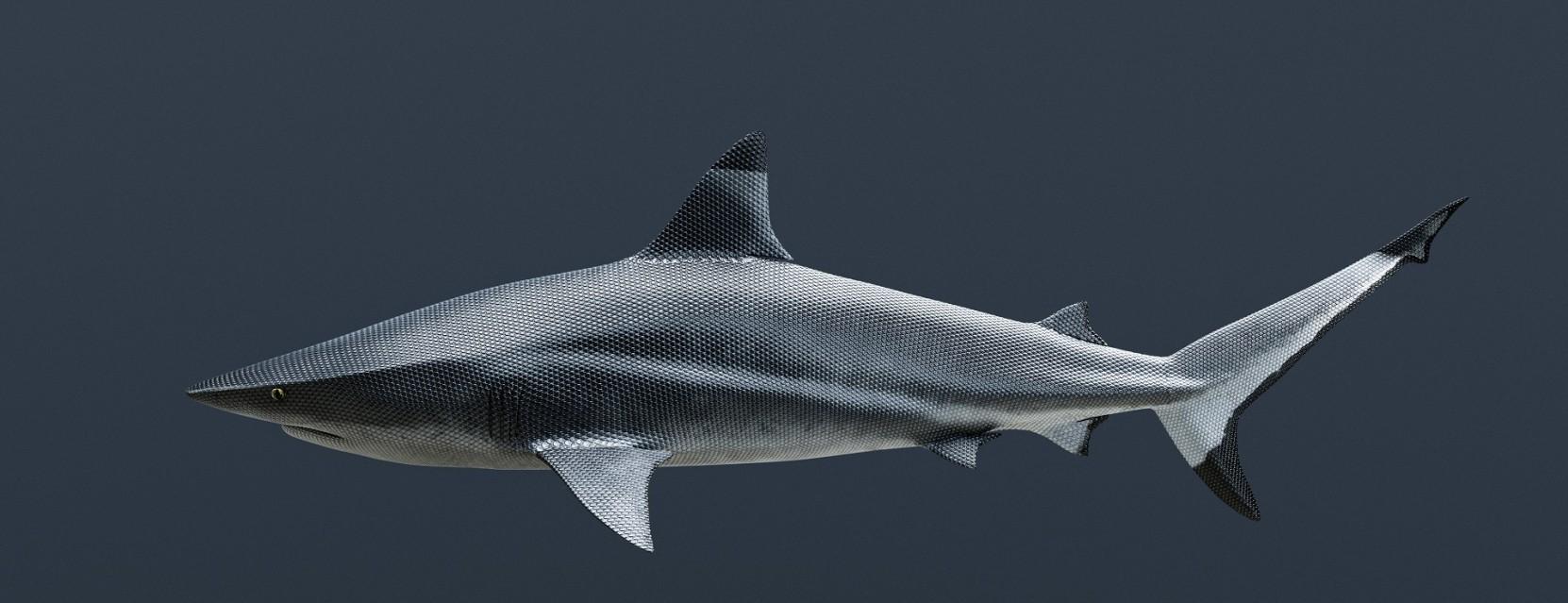 High Speed Shark - Vincent FOURNIER
