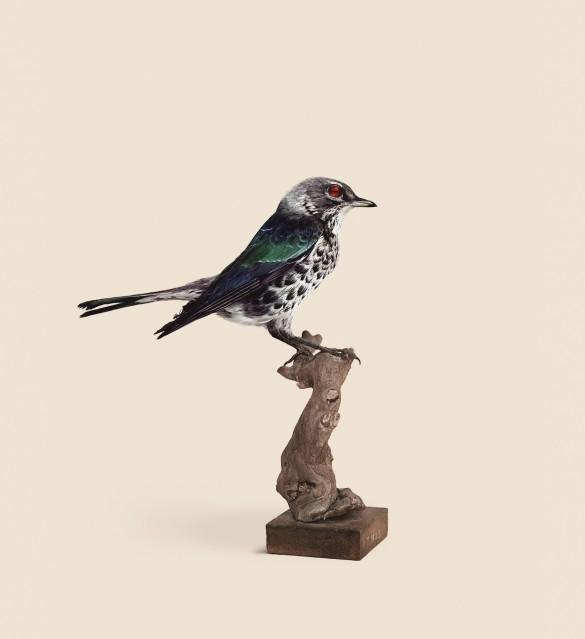 Sparrow - Vincent FOURNIER