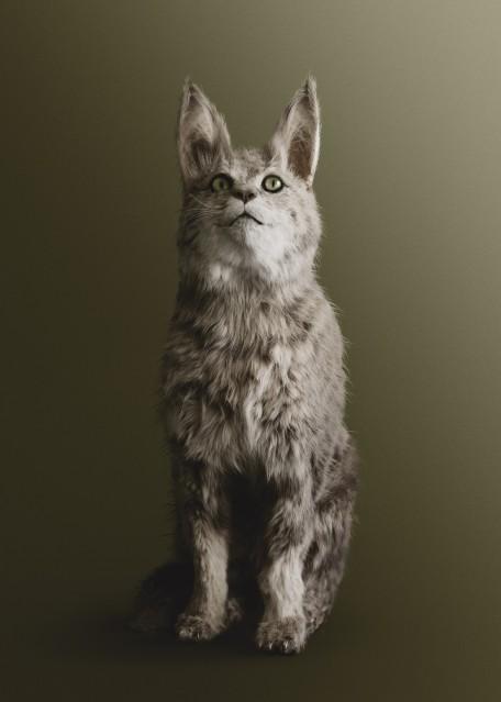 Cat - Vincent FOURNIER