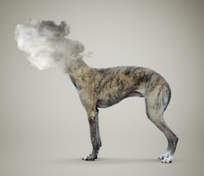 Cloudy Travelling Dog