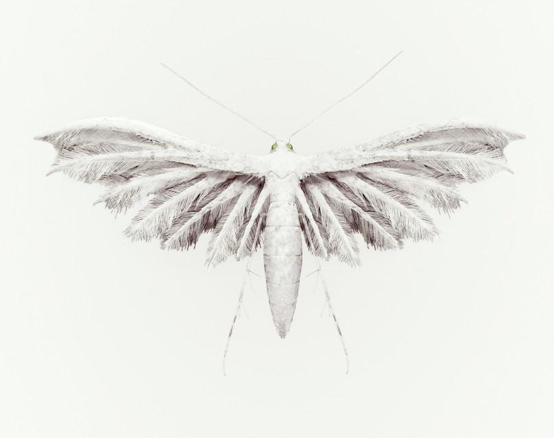 Rain Bird - Vincent FOURNIER