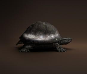 Black Celestial Tortoise