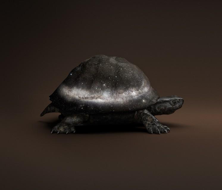 Black Celestial Tortoise - Vincent FOURNIER