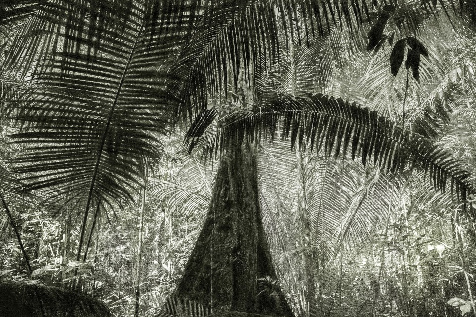 A Picturesques Voyage through Brazil 28 - Cássio VASCONCELLOS
