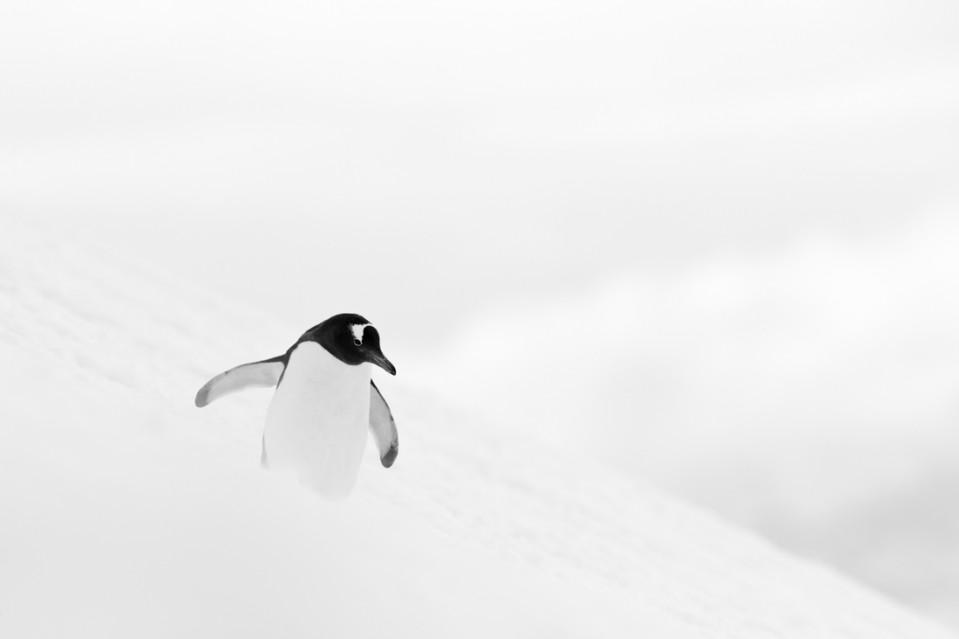 Snowboard in Antartica - Kyriakos KAZIRAS