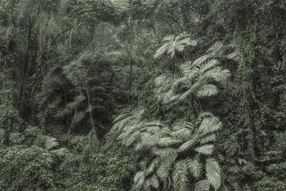 A Picturesque Voyage through Brazil 145 - Cássio VASCONCELLOS