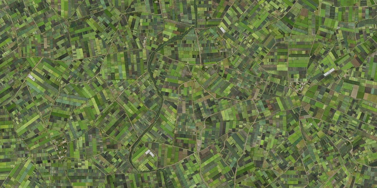 Verde - Cássio VASCONCELLOS
