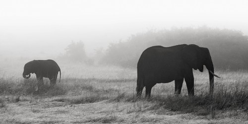 Elephants in the mist Part I