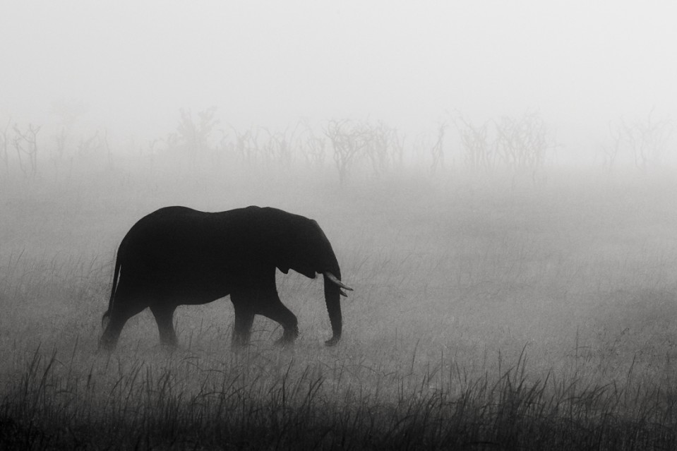 Elephants in the mist Part II - Kyriakos KAZIRAS