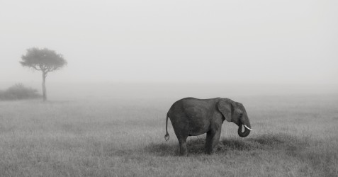 Elephants in the mist Part IV