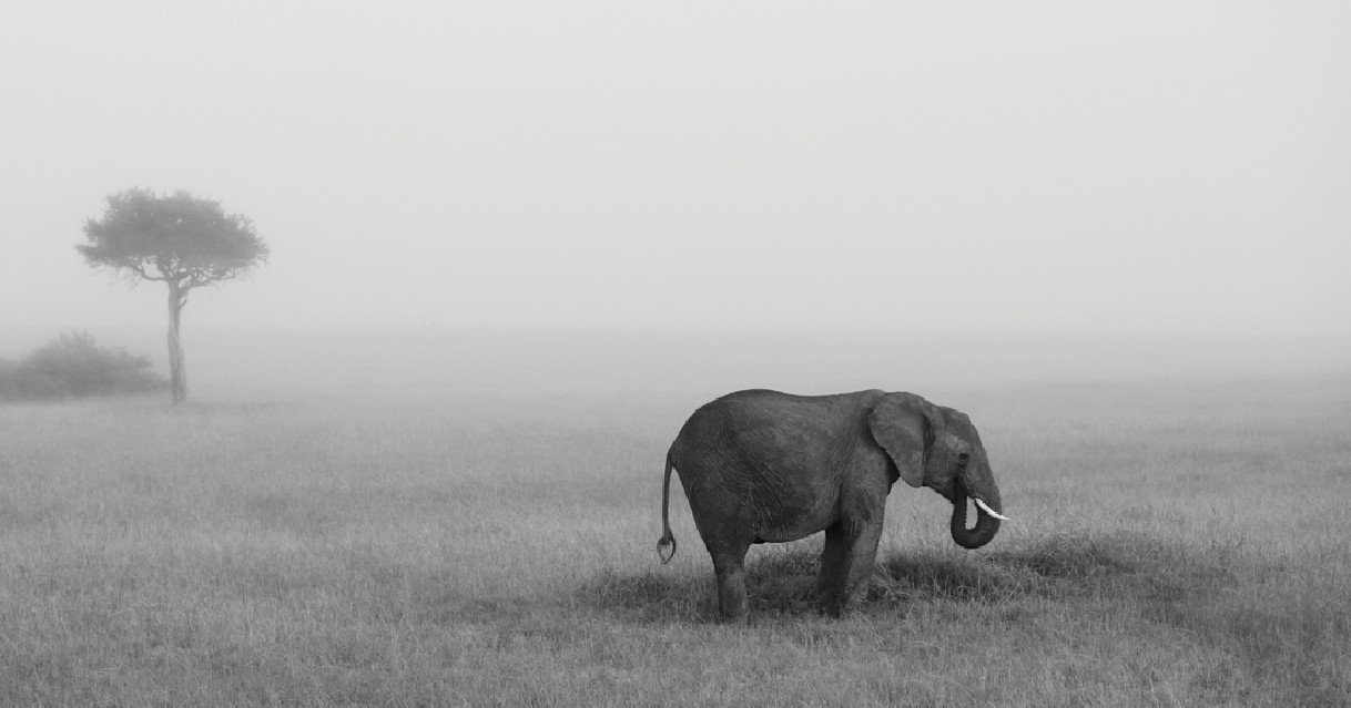 Elephants in the mist Part IV - Kyriakos KAZIRAS