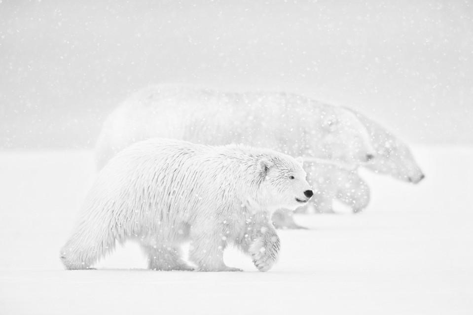 Snowfall Part III - Kyriakos KAZIRAS