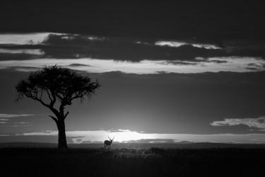 African shadows I