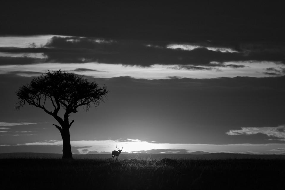African shadows I - Kyriakos KAZIRAS