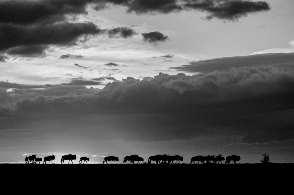 African shadows II - Kyriakos KAZIRAS