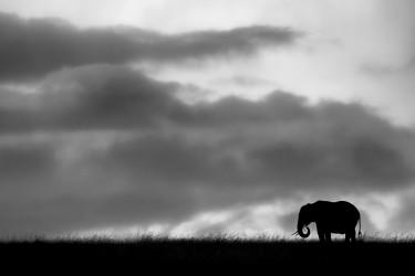 African shadows III