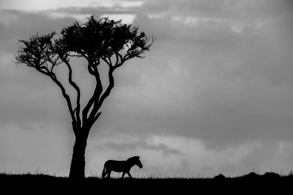 African shadows IV - Kyriakos KAZIRAS