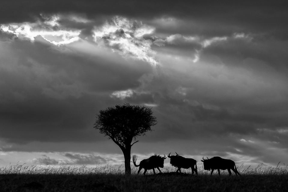 African shadows V - Kyriakos KAZIRAS