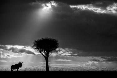 African shadows VI
