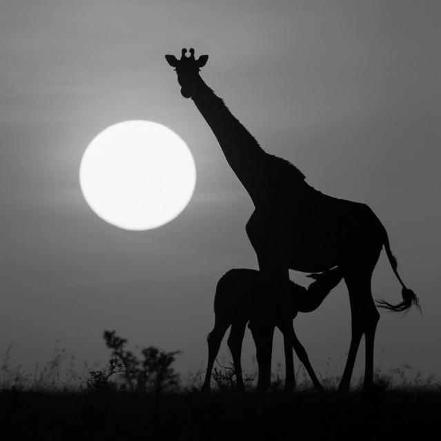 African shadows VII - Kyriakos KAZIRAS