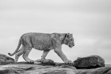Cub on stones