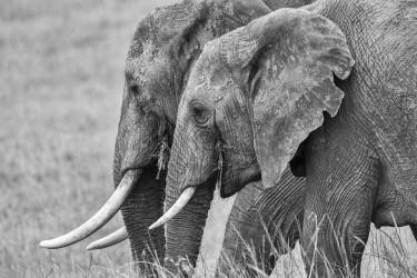 Walking elephants