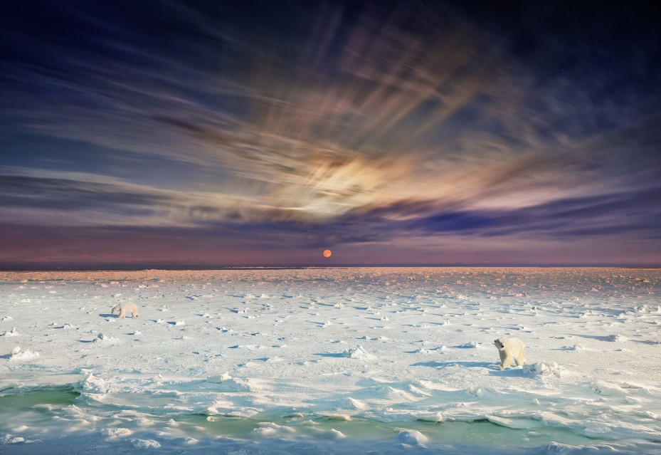 Polar Bears, Churchill,  Manitoba, 2019 - Stephen WILKES