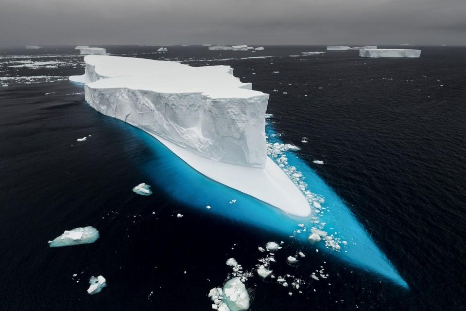 Adrift - Paul NICKLEN
