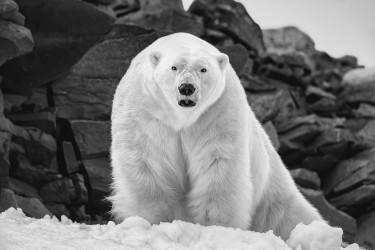 Polar Wisdom