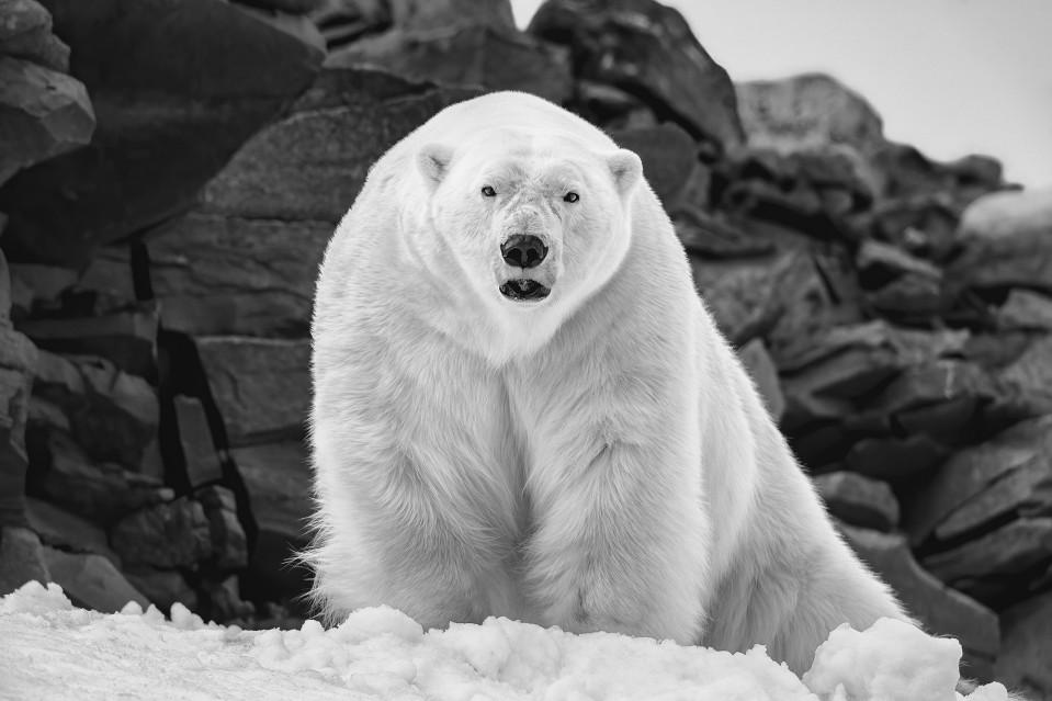 Polar Wisdom - Paul NICKLEN