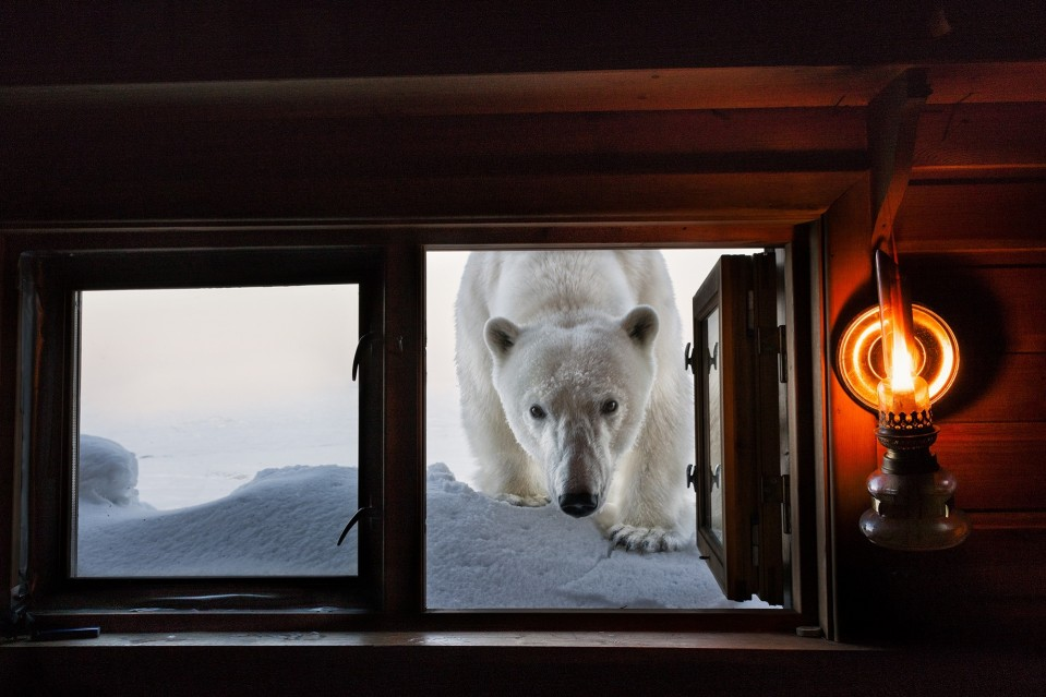 Face to Face - Paul NICKLEN