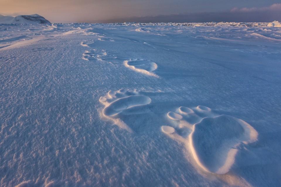 Polar Impressions - Paul NICKLEN