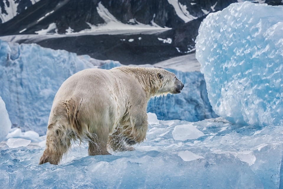 On Ancient Ice - Paul NICKLEN