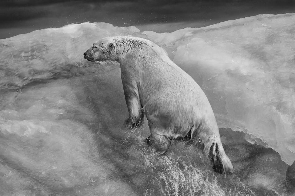 Ice Climber - Paul NICKLEN