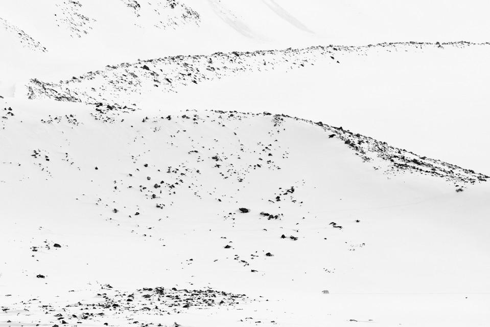 Lost in White - Paul NICKLEN
