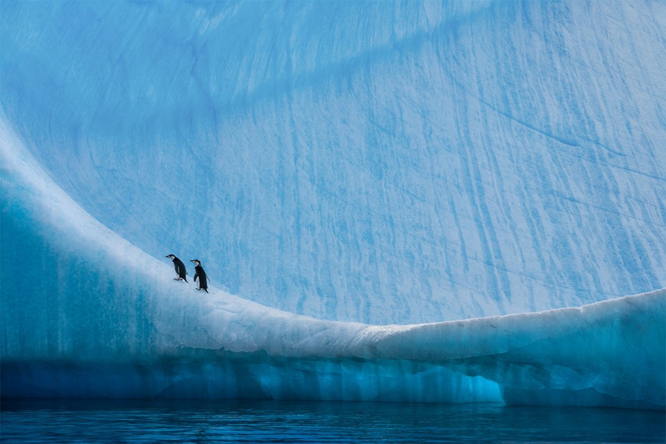 Home Ice Advantage - Paul NICKLEN