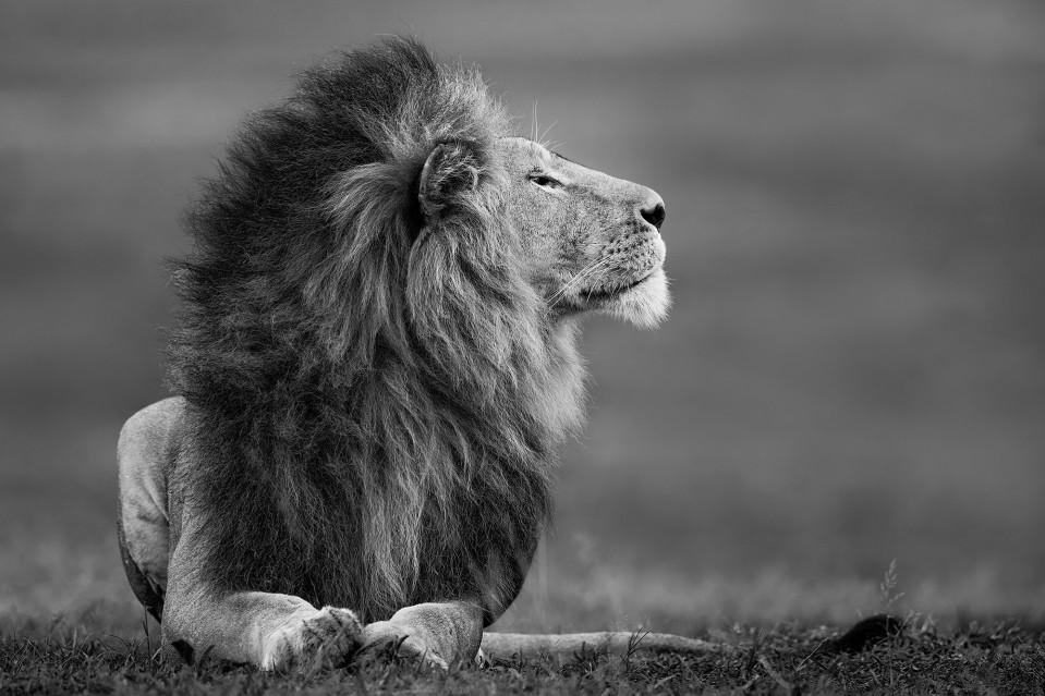 Master of the Mara - Paul NICKLEN